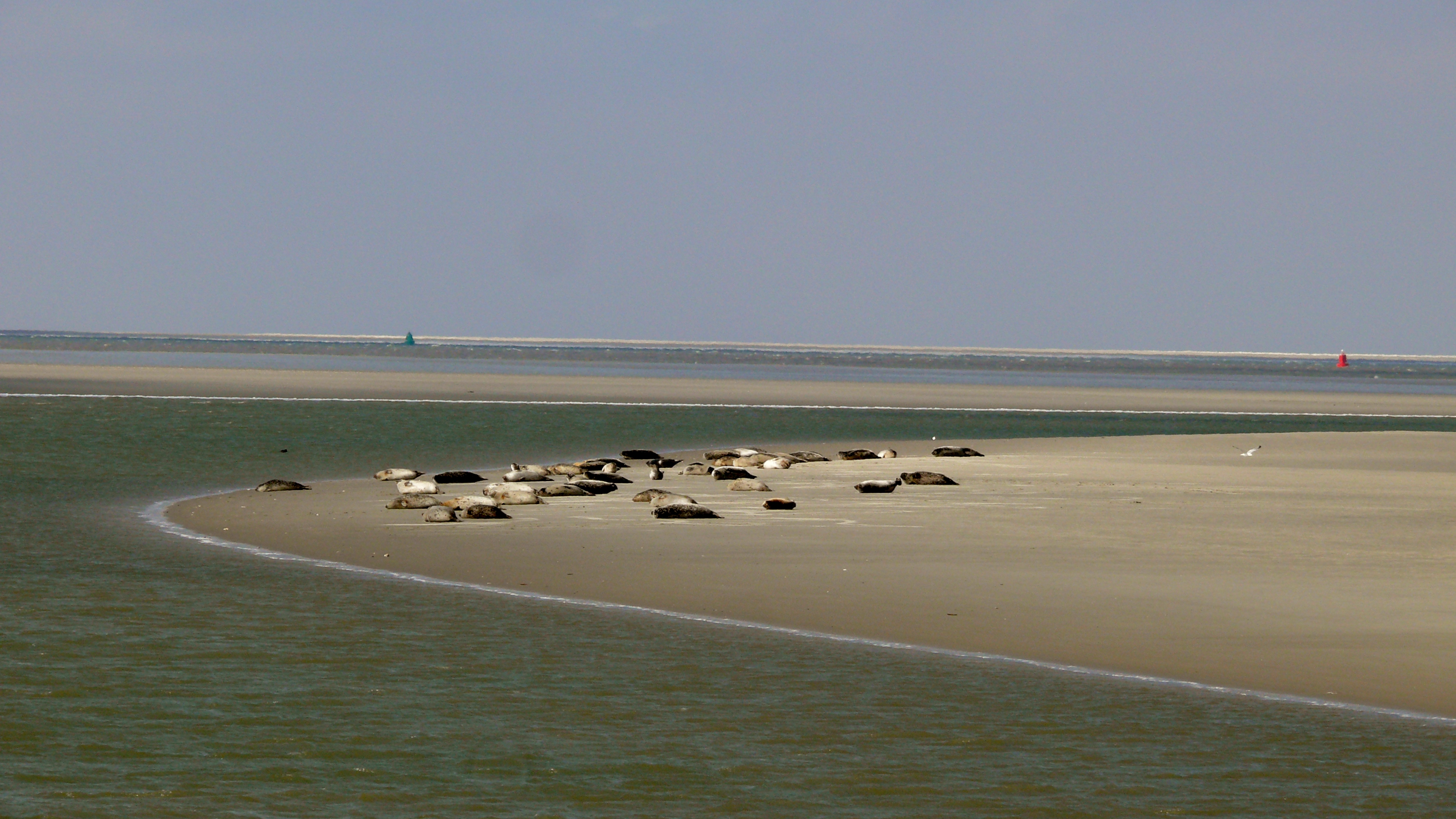 Lecture: Antibiotic resistance in the Wadden Sea